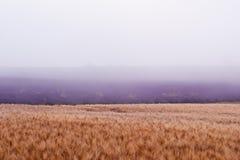 Σίτος και lavender Στοκ εικόνες με δικαίωμα ελεύθερης χρήσης
