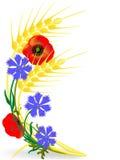 σίτος παπαρουνών αυτιών cornflowers ελεύθερη απεικόνιση δικαιώματος