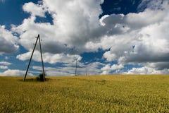 σίτος πεδίων Στοκ εικόνα με δικαίωμα ελεύθερης χρήσης