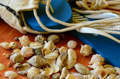 Σαγιονάρες, κοχύλια και αιώρα καθαρές στο καφετί ξύλινο υπόβαθρο Στοκ Εικόνα