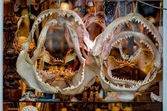 Σαγόνια καρχαριών για την πώληση στο κατάστημα Στοκ Φωτογραφία