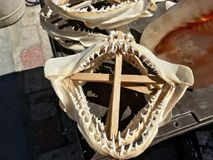 Σαγόνια καρχαριών για την πώληση στο κατάστημα Στοκ εικόνα με δικαίωμα ελεύθερης χρήσης