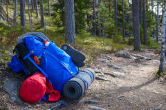 Σακίδιο πλάτης στο δάσος Στοκ Εικόνα