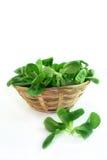 σαλάτα καλαμποκιού στοκ φωτογραφία με δικαίωμα ελεύθερης χρήσης