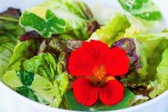 Σαλάτα μαρουλιού με nasturtium το λουλούδι και το φύλλο, κινηματογράφηση σε πρώτο πλάνο Στοκ Φωτογραφίες