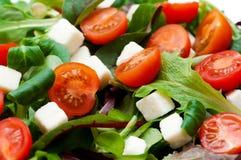Σαλάτα με το μαρούλι, Στοκ εικόνες με δικαίωμα ελεύθερης χρήσης