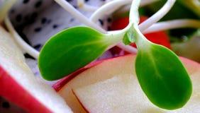 Σαλάτα της Apple Στοκ Φωτογραφίες