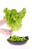 σαλάτα στοκ εικόνα