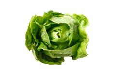 σαλάτα romaine Στοκ Εικόνες
