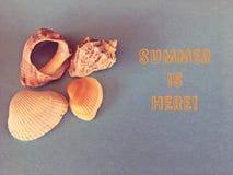 Σαλιγκάρια και κοχύλια θάλασσας με ένα κείμενο στοκ εικόνα