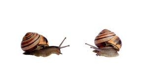 σαλιγκάρια στοκ εικόνα με δικαίωμα ελεύθερης χρήσης