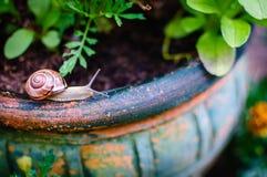 Σαλιγκάρι ΙΙ κήπων στοκ φωτογραφία με δικαίωμα ελεύθερης χρήσης