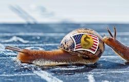 Σαλιγκάρι με τα χρώματα της σημαίας νομίσματος αμερικανικών δολαρίων που ενθαρρύνονται από άλλη Στοκ Φωτογραφίες