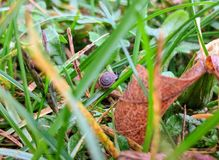 σαλιγκάρι μικροσκοπικό Στοκ Φωτογραφίες