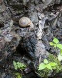 Σαλιγκάρι που σέρνεται στην προεξοχή βράχου και που κοιτάζει κάτω Στοκ Φωτογραφίες