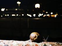 Σαλιγκάρι σε έναν τοίχο στοκ φωτογραφίες