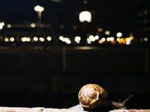Σαλιγκάρι σε έναν τοίχο στοκ φωτογραφίες με δικαίωμα ελεύθερης χρήσης