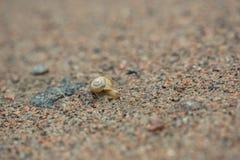 Σαλιγκάρι στην άμμο στοκ φωτογραφία