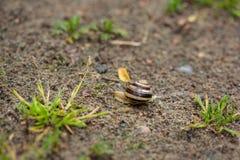 Σαλιγκάρι στην άμμο Στοκ Εικόνες