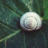Σαλιγκάρι στη φύση στοκ φωτογραφία