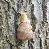 Σαλιγκάρι στο δέντρο στο πάρκο Στοκ Εικόνες