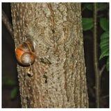 Σαλιγκάρι στο δέντρο στοκ φωτογραφία με δικαίωμα ελεύθερης χρήσης