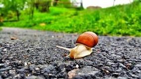 Σαλιγκάρι στο δρόμο στοκ φωτογραφία