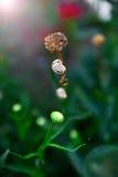 Σαλιγκάρι στο μίσχο λουλουδιών, Στοκ Εικόνες