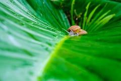 Σαλιγκάρι στο φύλλο στοκ εικόνα