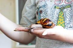 Σαλιγκάρι υπό εξέταση στοκ φωτογραφία με δικαίωμα ελεύθερης χρήσης