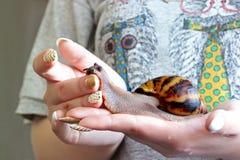 Σαλιγκάρι υπό εξέταση στοκ φωτογραφίες