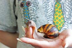 Σαλιγκάρι υπό εξέταση στοκ φωτογραφία