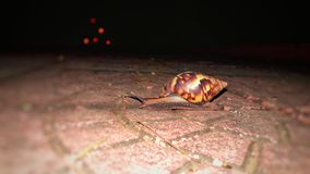 Σαλιγκάρι στοκ εικόνα