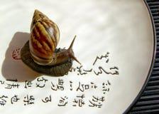 σαλιγκάρι στοκ εικόνες με δικαίωμα ελεύθερης χρήσης