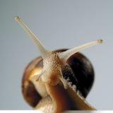 σαλιγκάρι Στοκ φωτογραφίες με δικαίωμα ελεύθερης χρήσης