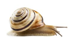 Σαλιγκάρι Helicid στοκ εικόνες
