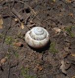 Σαλιγκάρι Shell στο έδαφος στον κήπο στοκ εικόνα με δικαίωμα ελεύθερης χρήσης