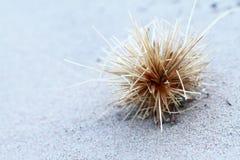 Σανός στην παραλία Στοκ Εικόνες