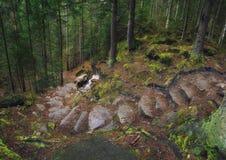 σαν δάσος ανασκόπησης Στοκ Εικόνες