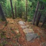 σαν δάσος ανασκόπησης Στοκ Εικόνα