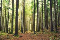 σαν δάσος ανασκόπησης Στοκ εικόνα με δικαίωμα ελεύθερης χρήσης
