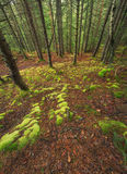 σαν δάσος ανασκόπησης Στοκ Φωτογραφία