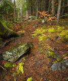 σαν δάσος ανασκόπησης Στοκ φωτογραφίες με δικαίωμα ελεύθερης χρήσης