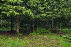σαν δάσος ανασκόπησης Στοκ Φωτογραφίες