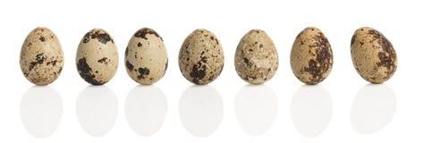 σαν αυγά ανασκόπησης πολλές νησοπέρδικες Στοκ φωτογραφίες με δικαίωμα ελεύθερης χρήσης