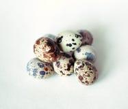 σαν αυγά ανασκόπησης πολλές νησοπέρδικες Στοκ Εικόνες