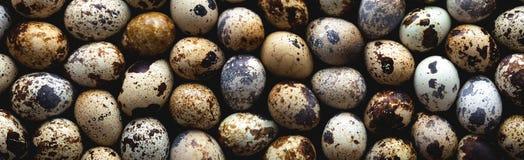 σαν αυγά ανασκόπησης πολλές νησοπέρδικες Στοκ φωτογραφία με δικαίωμα ελεύθερης χρήσης