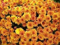 σαν λουλούδια ανασκόπησης Στοκ Εικόνα