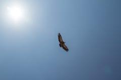 σαν πουλί ελεύθερο Στοκ Εικόνα