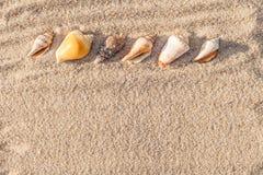 σαν στενά κοχύλια θάλασσας άμμου ανασκόπησης επάνω Στοκ φωτογραφία με δικαίωμα ελεύθερης χρήσης